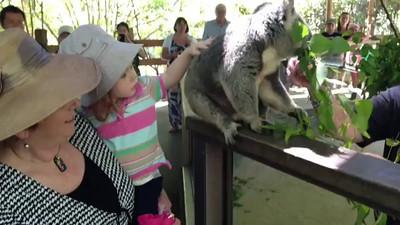 Scarlett patting a Koala on her 2nd Birthday with Nanna - Koala Park Castle Hill