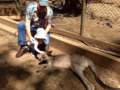Scarlett patting a Kangaroo on her 2nd Birthday with Pops (Terry) - Koala Park Castle Hill