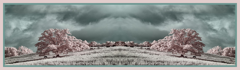 Infrared Capture of a pasture near Cone Mansion off the Blue Ridge Parkway