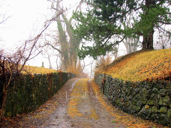 Road Less Traveled ~ Mount Hope Cemetery