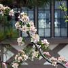 Spring flowers in bloom at Belfield.