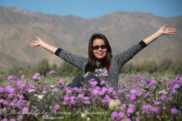 Flower Bloom in Borrego Springs