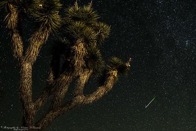 Perseid Meteor Shower. 2:00am