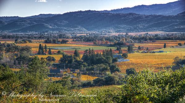Vineyards in St. Helena