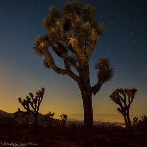 Joshua Tree at Night. 12:17am
