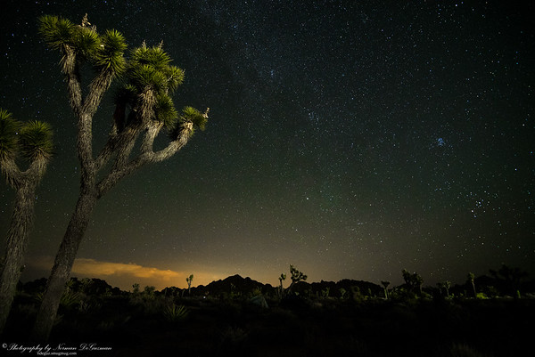 Joshua Tree at Night. 2:26am