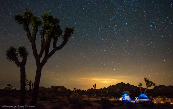 Joshua Tree at Night. 1:03am