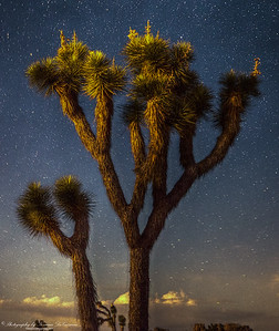 Joshua Tree at Night. 12:26am