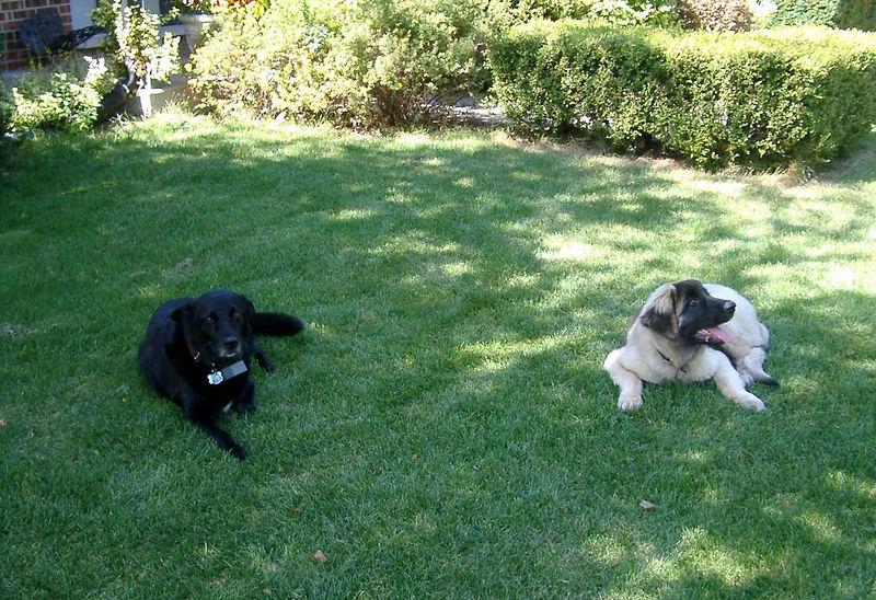 12 Cooper & MaryAnn's Pup Sep 2004