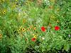 05 Wild Flwr Garden Sep 2004