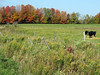 385 U P  Fall colors near Stephenson, MI
