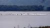 492 American Pelican flock, Lake Pepin