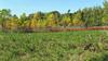 479 Frontenac State Park, MN