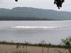 487 American Pelican flock, Lake Pepin