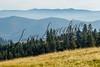Scenery, landscape, scenic, forest land, Montana