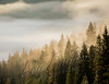Scenery, fog, evergreens, fall