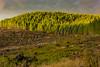 Scenery, scenic, landscape, habitat