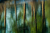 Scenery, reflections of trees on river