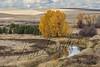Scenery, autumn foilage, Latah, Washington