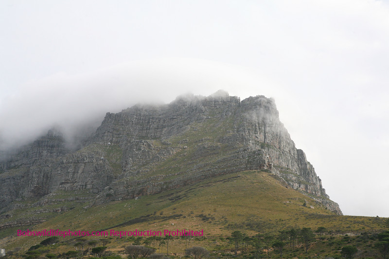 Table Mountain taken from the window of our B&B