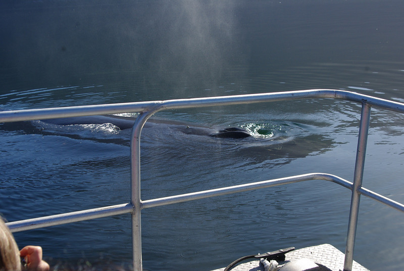 This humpback came right up beside the boat.