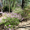 Azalea Path Apr 2016 112