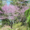 Azalea Path Apr 2016 121