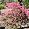 Azalea Path Apr 2016 116