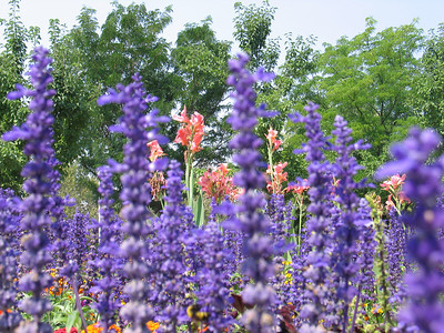 Beautiful_Flowers_at_BYU_1484.JPG