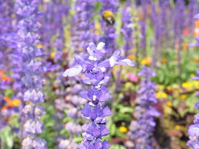 Beautiful_Flowers_at_BYU_1482.JPG