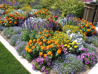 Beautiful_Flowers_at_BYU_1480.JPG