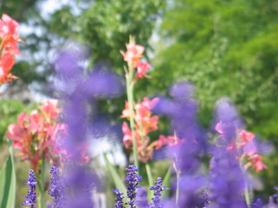 Beautiful_Flowers_at_BYU_1485.JPG