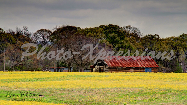 Barn In a Yellow Field