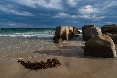 Kelp on Beerbarrel Beach, St Helens Tasmania