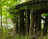 Looking down one side of the bridge.  The thick vegetation made for poor lighting and limited shooting angles