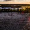 COTTON_FIELDS_DJI_0561