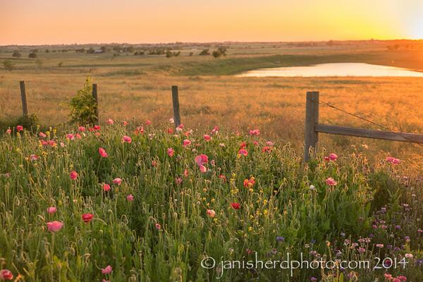 Staggerlee Farm, Brenham, Texas