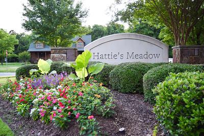 Hattie's Meadow