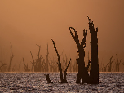 Dead Trees on Murray River, Wymah VIC