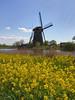 Kinderdijk09