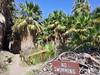 CoachellaValleyPreserve13