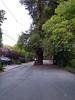 RedwoodDrRossCA