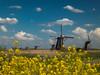 Kinderdijk16
