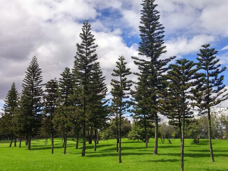 ParqueSimonBolivar18