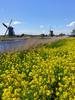 Kinderdijk17