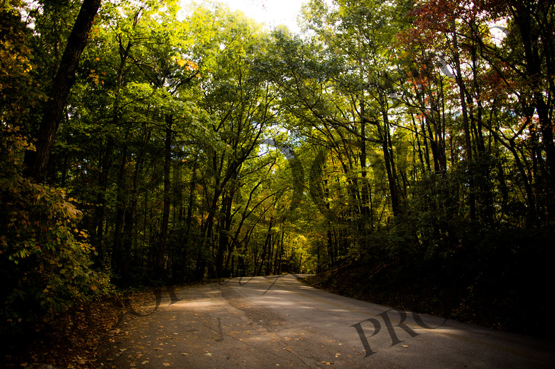 South Carolina State Park's - Creek at Table Rock State Park.  (Fall Leaves Road Scene)
