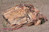 This is a piece of petrified wood.