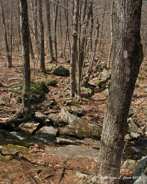 The first of only a few brook crossings on the mountain