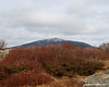 Mt. Monadnock behind the summit bushes