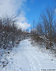12-6-09<br /> Looking up one of the trails